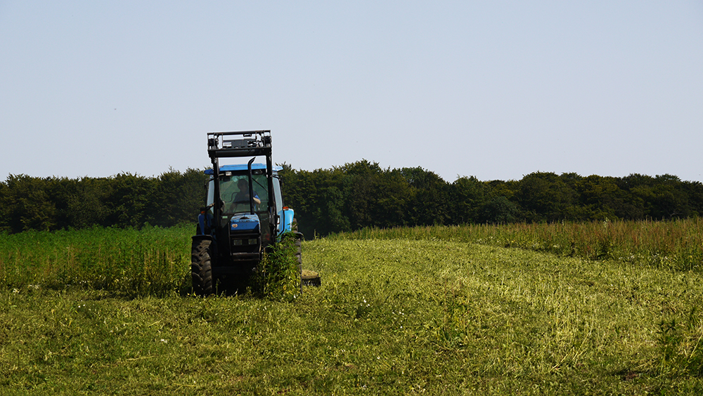 Tractor ploughing hemp crop