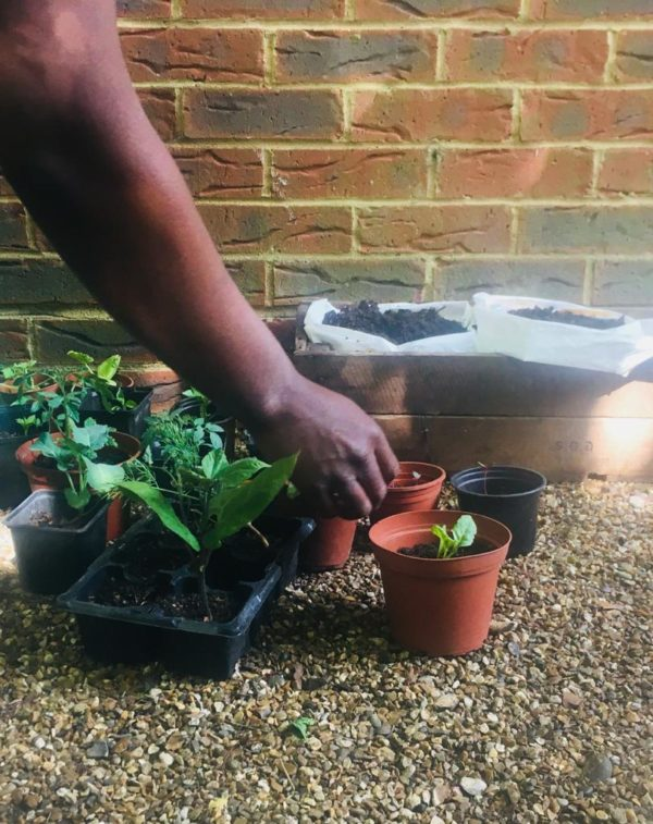 Growing solidarity - growing seedings in pots