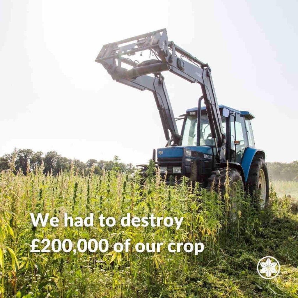 Hemp Crop Destruction. UK Hemp.